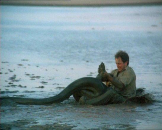 Félix y las anacondas