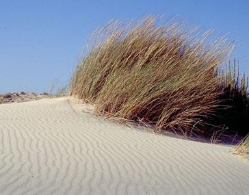 Flora de las dunas de Doñana