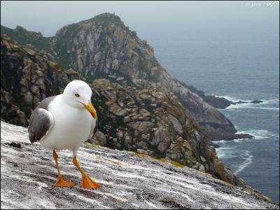 Parque Nacional Marítimo-Terrestre de las Islas Atlánticas de Galicia.