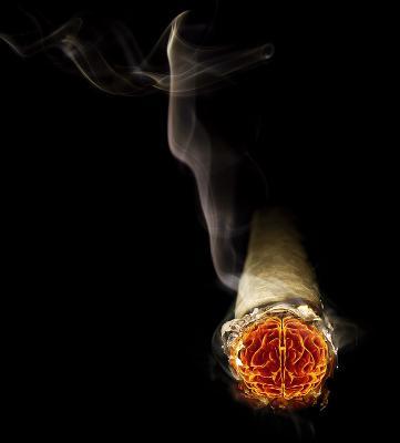 El humo del tabaco es perjudicial para el medio ambiente